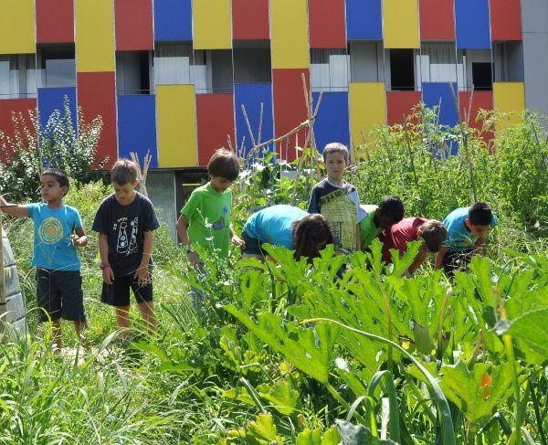 7 actividades para el Día Mundial del Medio Ambiente en la escuela