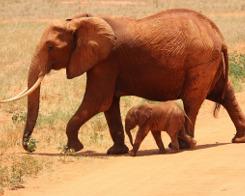 activitat sobre el tràfic il·legal d'espècies pel dia mundial del medi ambient