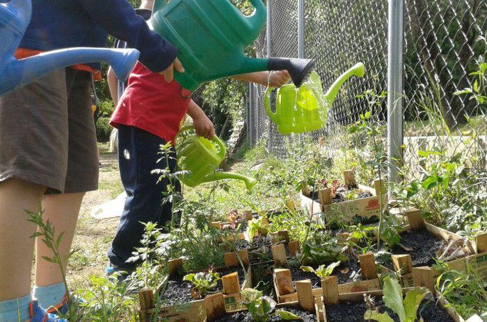com fer un hort escolar ecològic