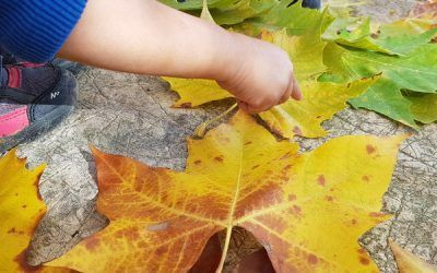 Com fer Land Art amb nens i nenes