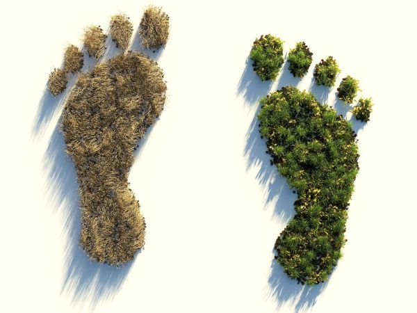 Com calcular la petjada ecològica