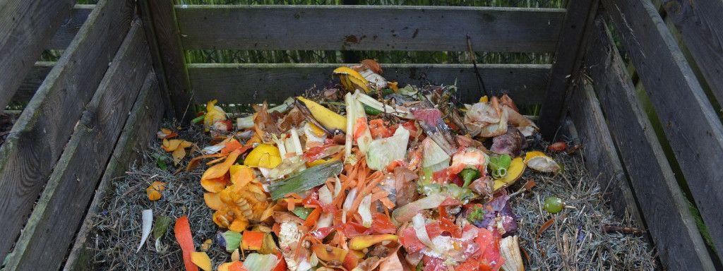 Actividades pedagógicas a partir del compostador