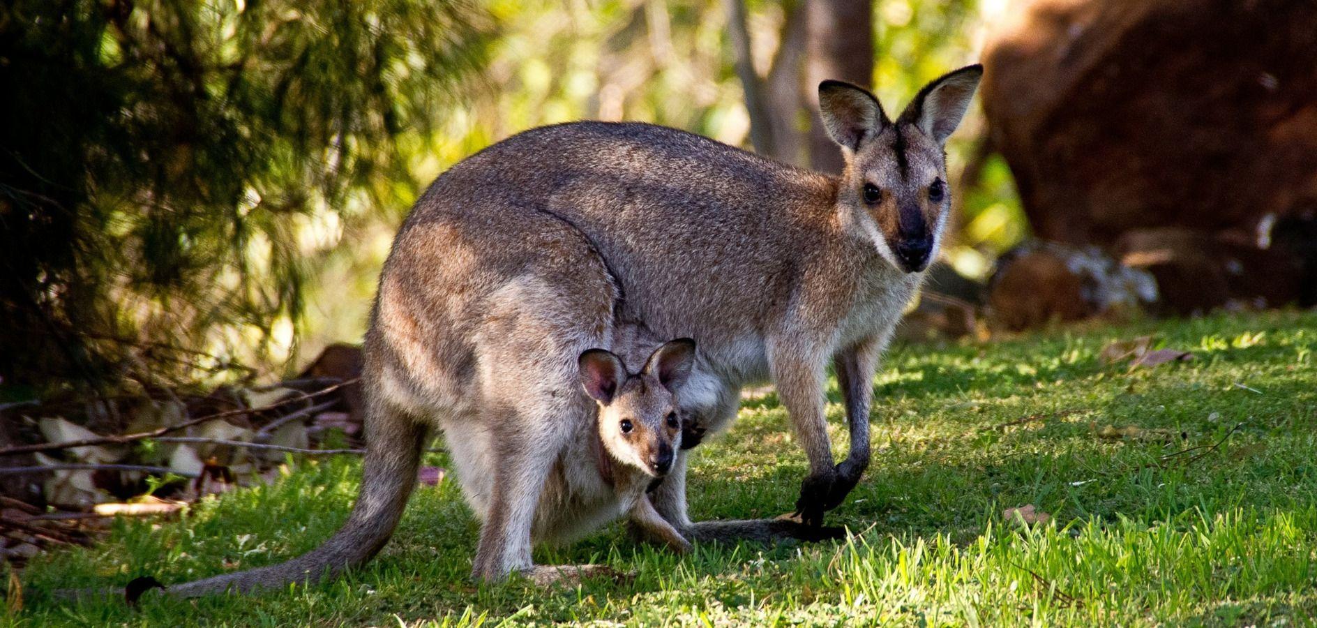 colònies angles Australia Fundesplai