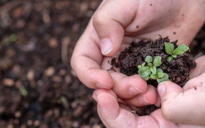 7 acciones educativas para el día del medio ambiente 2021