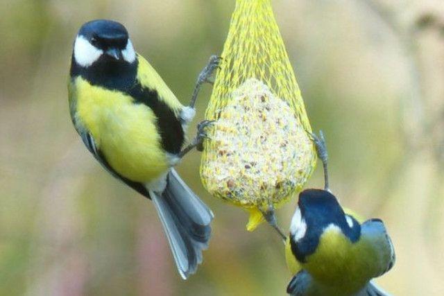 Com fer menjadores per a ocells Fundesplai