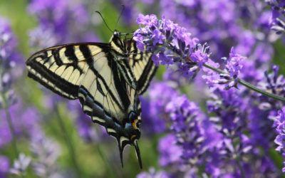 Com afavorir la biodiversitat al pati de l'escola