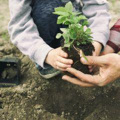 Reforestació activitat infants Fundesplai