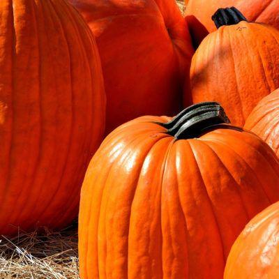 L'octubre és temporada de carbasses!